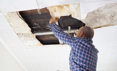 Could Your Business Have Mold? Here Are 4 Ways To Detect It