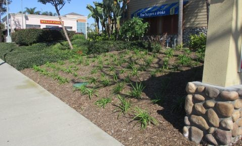 Why You Should Count on Professionals to Mulch Your Commercial Property