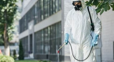 3 Reasons Why Pest Control Is Important During the Summertime | Royal Oak Property Services