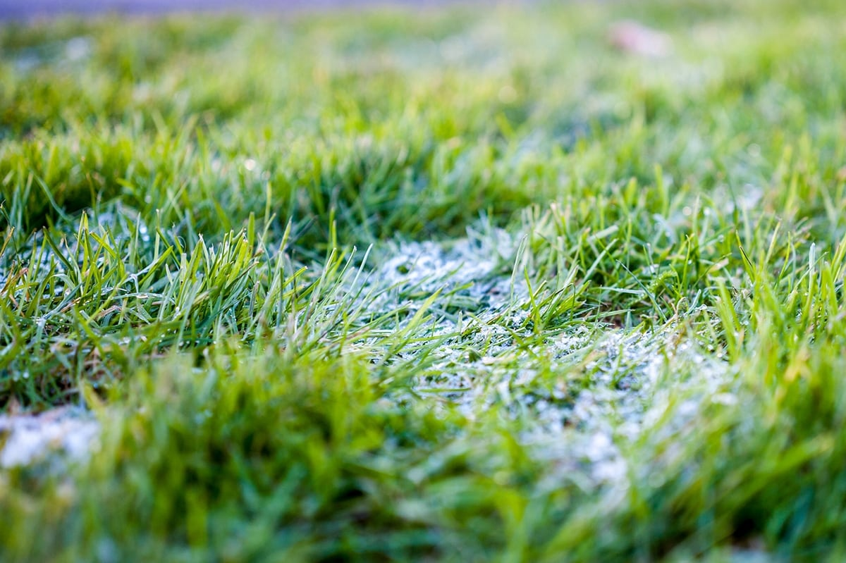 An image of frost on a green lawn.